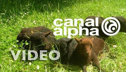 media_video